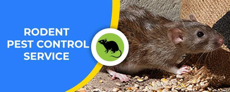Rodent Control Nicholls